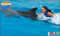 Dolphin swim and ride Cozumel